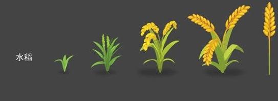摩尔庄园水稻怎么获得-水稻种子免费获取方法